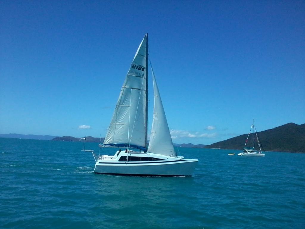 Ocelot under sail